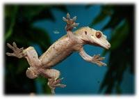 crested gecko tank setup