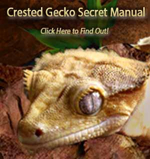 All Aspects of Crested Gecko Price | Crested Gecko Care